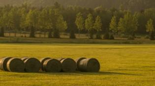 aplicativo auxilia agricultores