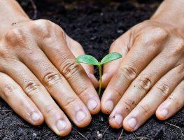 Aplicativo auxilia agricultores contra pragas
