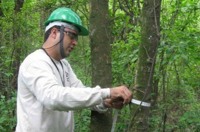 Antônio de Souza Chaves engenheiro florestal