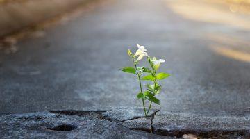Como crescer no emprego durante a crise